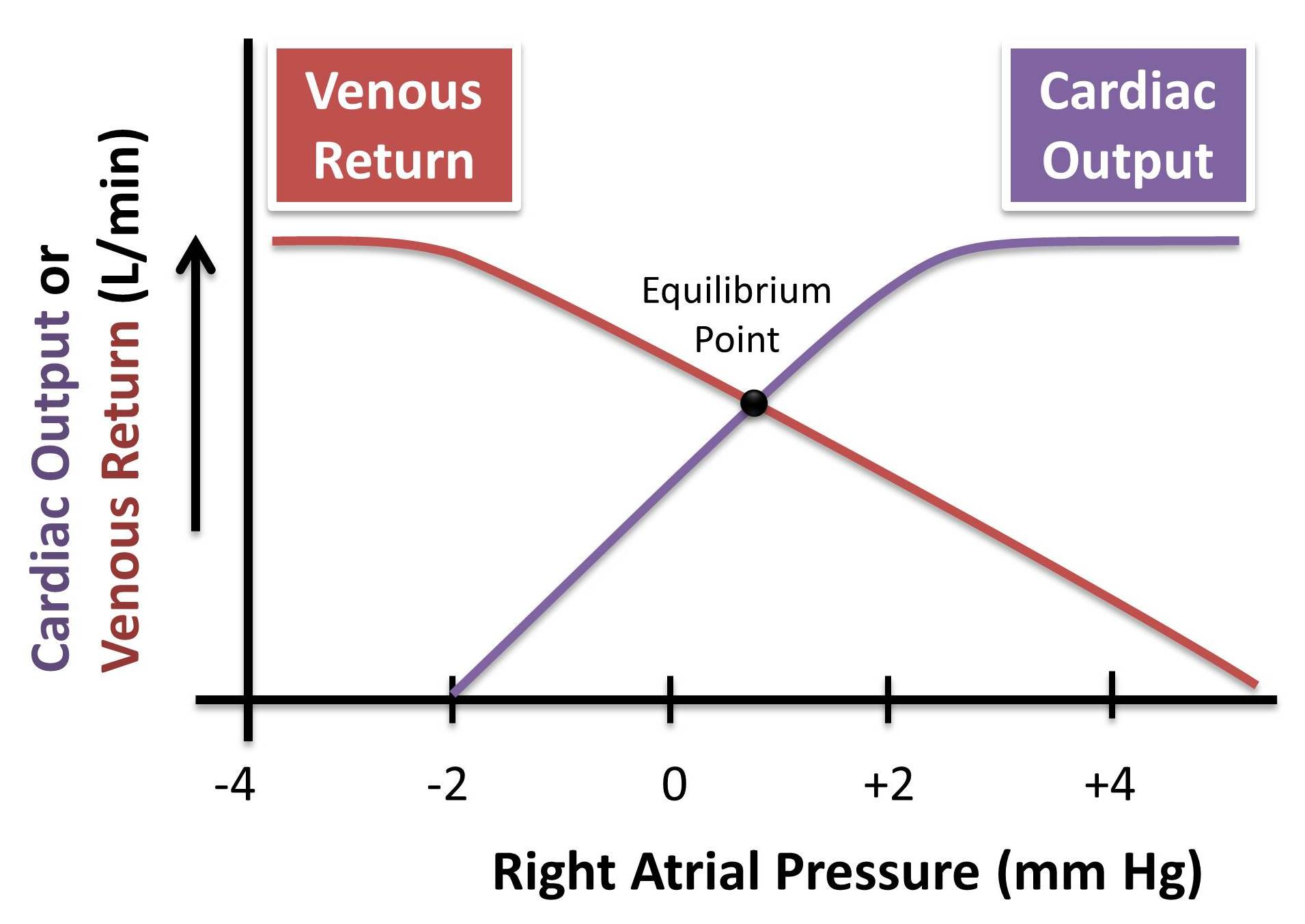 venous return and cardiac output relationship advice