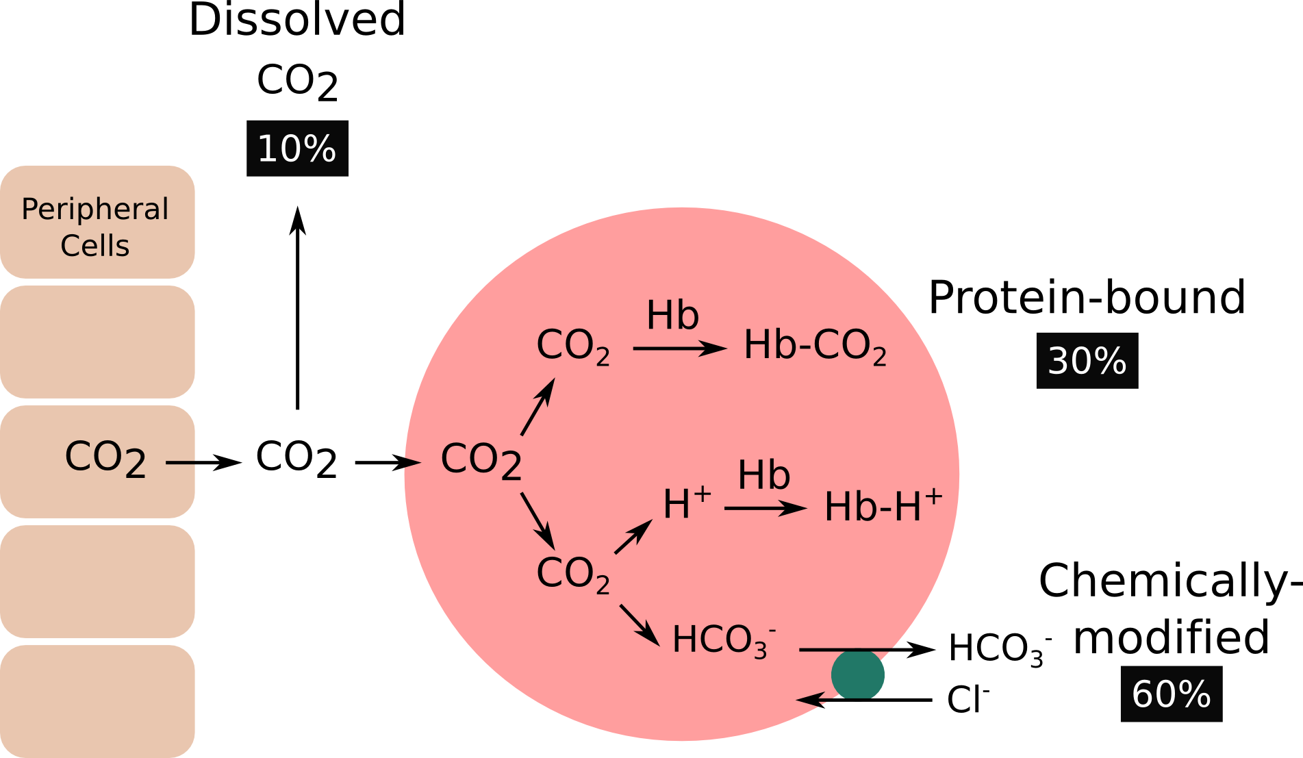 carbon dioxide content of softdrinks essay Measuring carbon dioxide in the soft drinks industry soft drinks while the containers are being filled during the bottling process, large volumes of carbon.